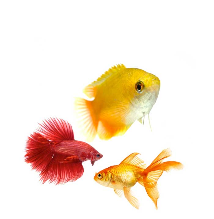 Quaraintine Exporter Shipping Ornamental Freshwater Saltwater Fishes Plants and Corals