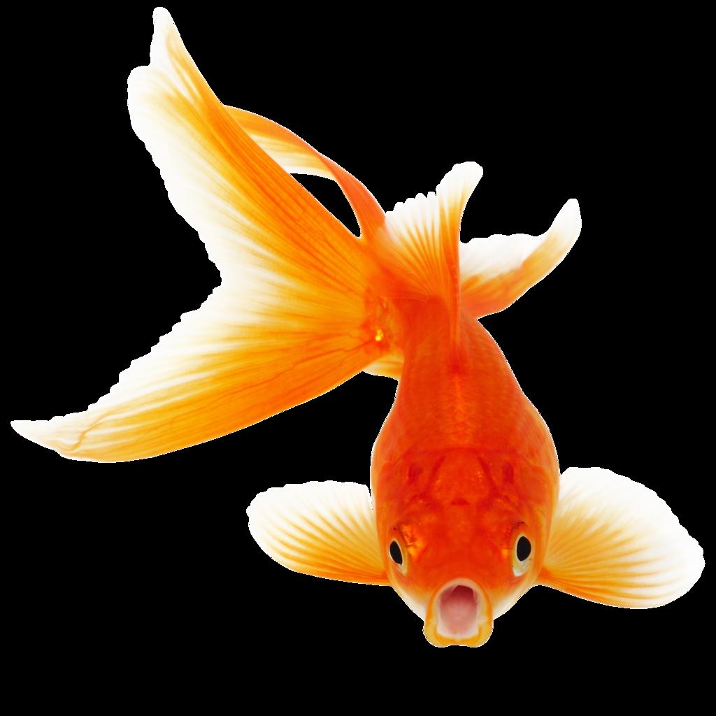 biggest largest fish exporter in asia