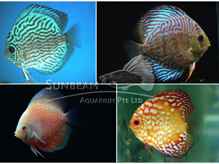 ASSORTED DISCUS