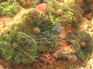 luminus green flower mushroom