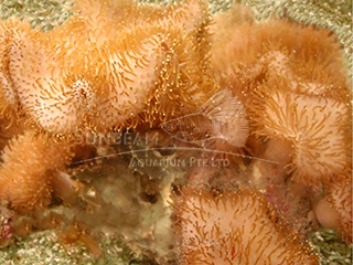 l. tentacles soft mushroom-baby