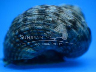 turbo shell