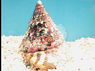 algae shell
