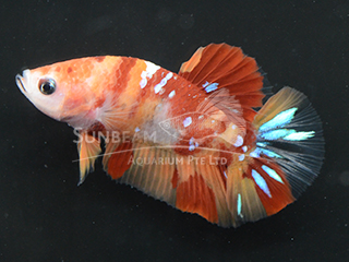 WYSIWYG Candy Nemo HMPK