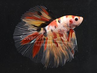 WYSIWYG Candy Nemo HM