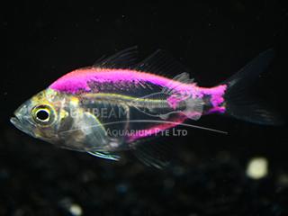 Art Purple Glass Fish