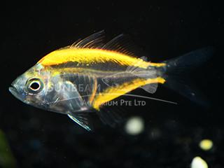 Art Yellow Glass Fish