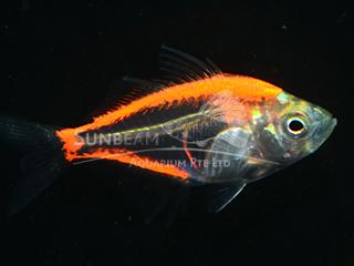 Art Orange Glass Fish