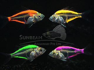 Assorted Glass Fish