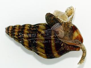 Spiral Snail